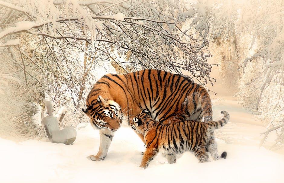 วันสัตว์โลก World Animal Day