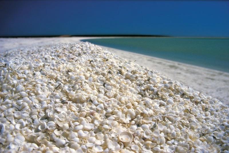 ชายหาดเปลือกหอย ประเทศออสเตรเลีย