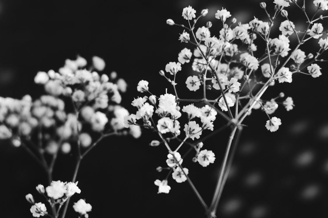 Image result for รูปดอกไม้เศร้าๆ