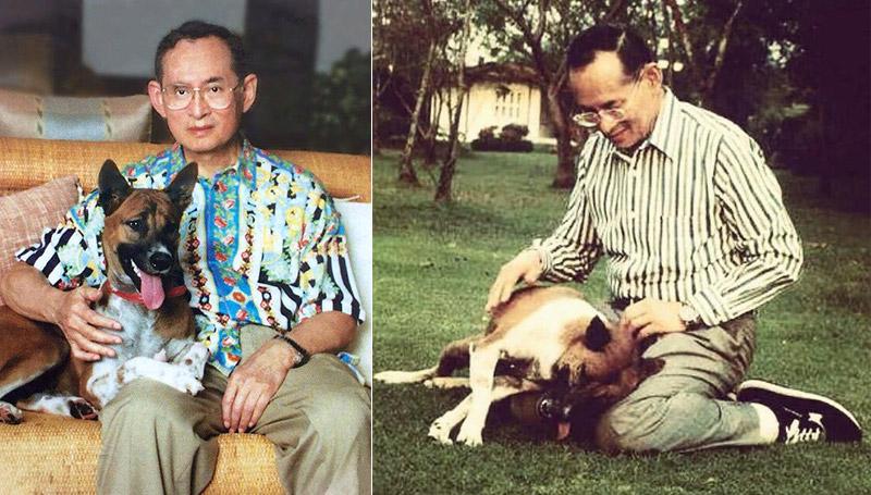 คุณทองแดง สมเด็จพระเทพฯ สัตว์ทรงเลี้ยง สุนัขทรงเลี้ยง ในหลวงรัชกาลที่ 9