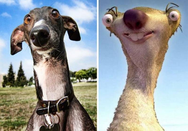 ฝาแฝด ภาพ หมา