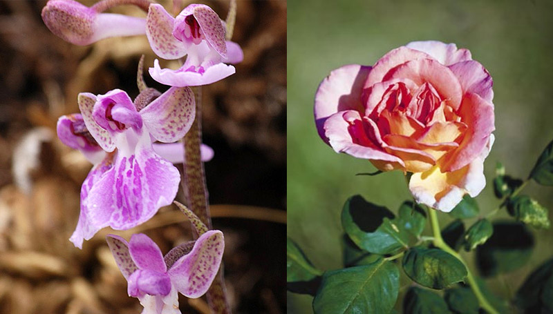 ดอกไม้ ราชวงศ์ไทย