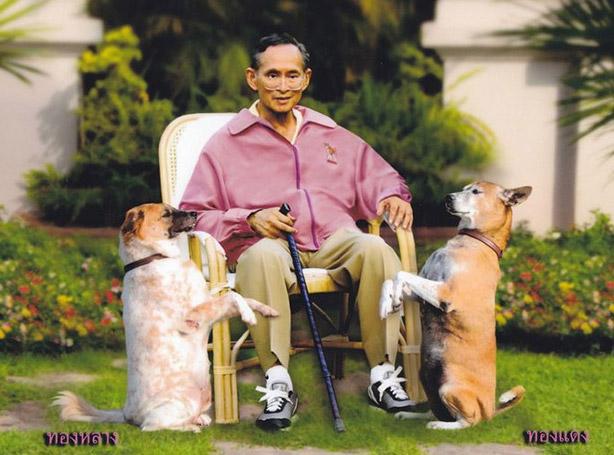 คุณทองหลาง เป็นสุนัขเพศเมีย ที่เลี้ยงคู่กับคุณทองแดง