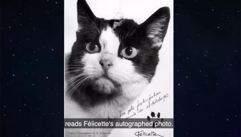 สัตว์โลก อวกาศ แมว