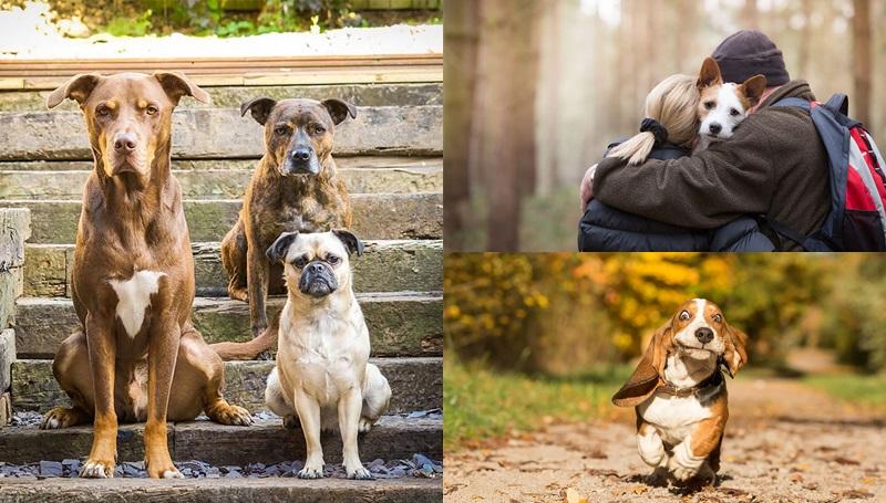 น้องหมา ภาพถ่าย สุนัข หมา