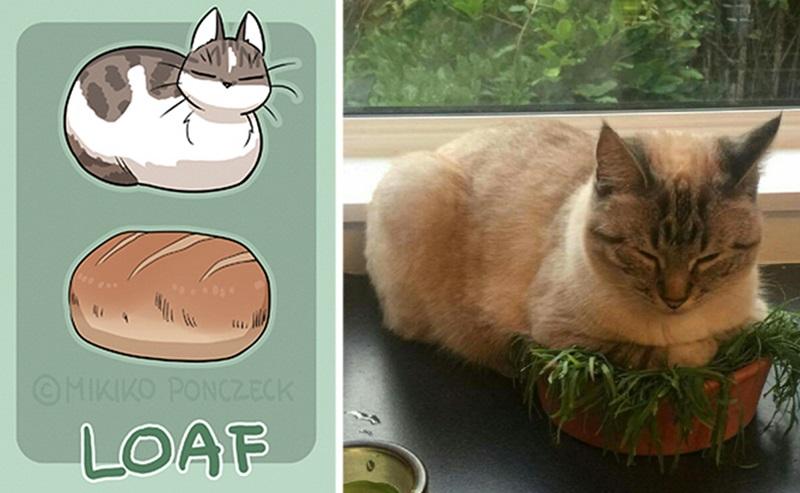 ขนมปัง ศิลปิน แมว