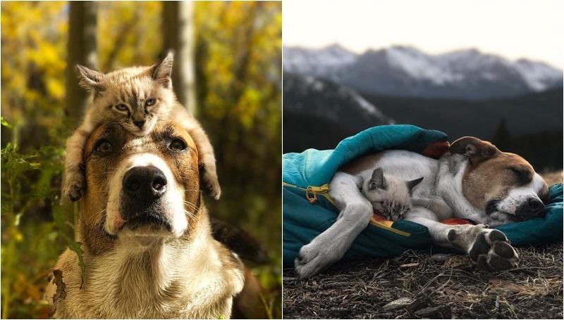 หมา เพื่อน แมว