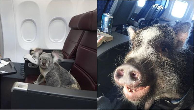 ผู้โดยสาร เที่ยวบิน