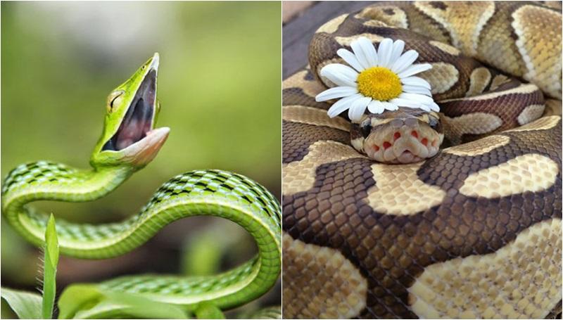 ความกลัว ความเอ็นดู งู
