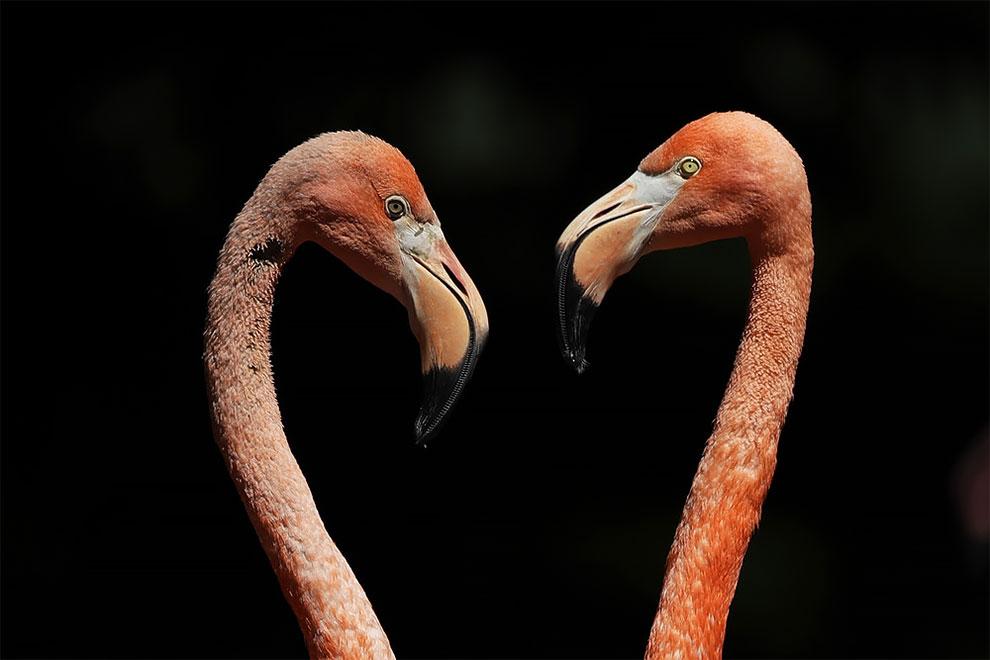 ภาพถ่ายสัตว์ ภาพสวยงาม สัตว์โลกน่ารัก