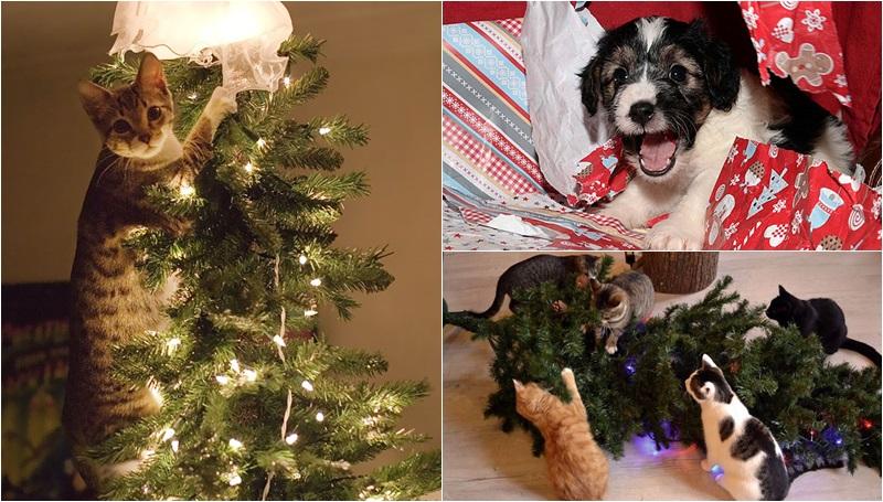 ขำๆ วันคริสต์มาส สัตว์เลี้ยง