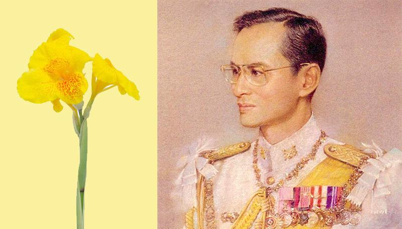 ความเป็นมา ดอกพุทธรักษา ประวัติ วันพ่อแห่งชาติ วันสำคัญ สัญลักษณ์