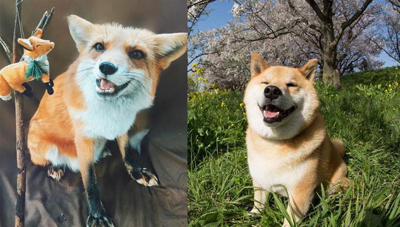 กอริลล่า สวนสัตว์ สัตว์โลกน่ารัก หมา แมว