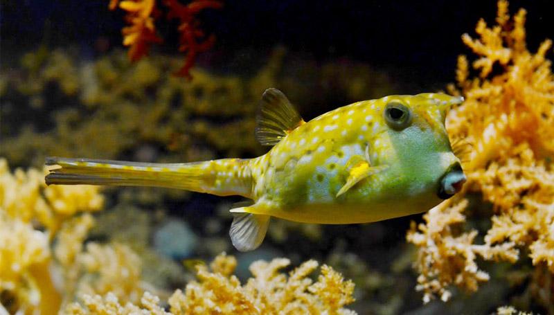 คำศัพท์ ทะเล ปลา สัตว์น้ำ เรียนภาษาอังกฤษ โลกใต้น้ำ