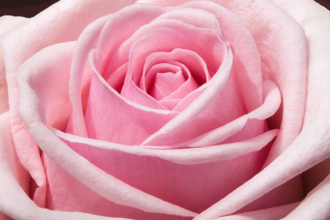 ภาพสีชมพูสวยๆ Pink Pastel