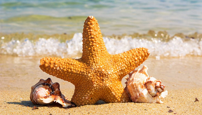 starfish = ปลาดาว