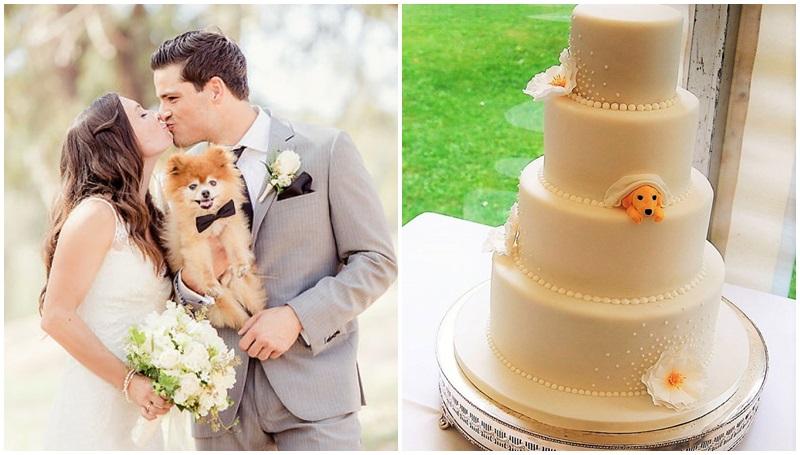 คู่แต่งงาน งานแต่ง น้องหมา
