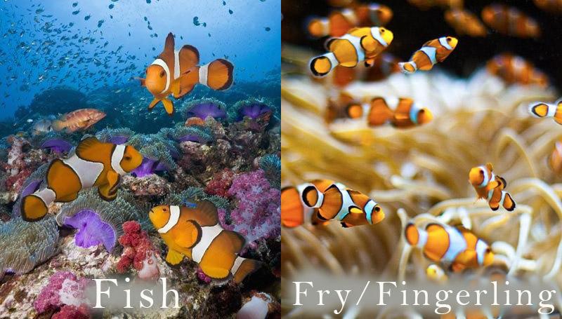 ปลา คำศัพท์ภาษาอังกฤษ 20 ชนิดสัตว์ ตอนเด็ก-ตอนโต