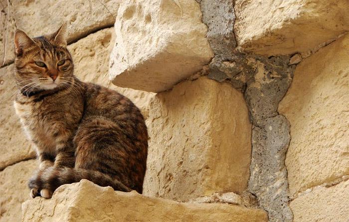 นี่ทั่นเป็นแมวที่โลกส่วนตัวสูง หรืออยู่บนที่สูงคะทั่น เมี้ยวววว