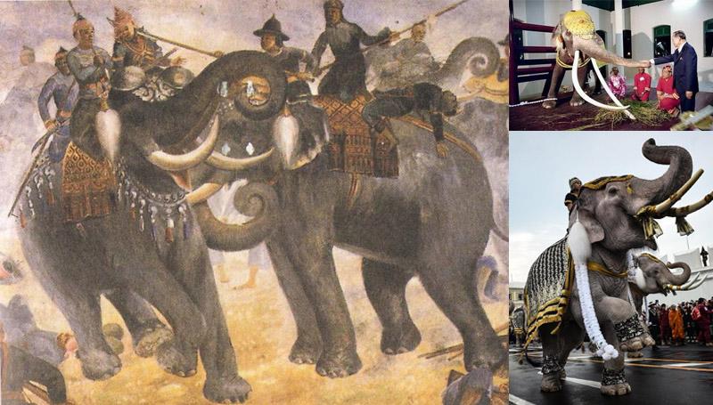 ความเป็นมา ช้าง ประวัติ วันช้างไทย วันสำคัญ