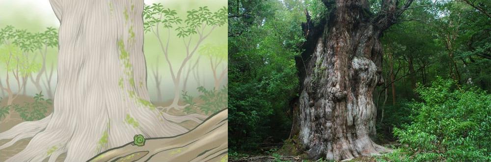 ต้นสนโจมง ต้นไม้โบราณ