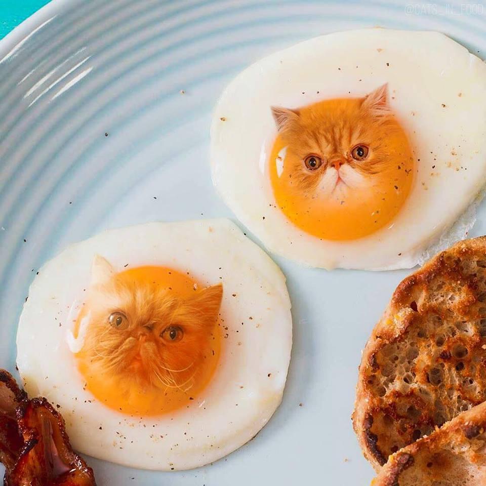 จะน่ารักขนาดไหน? เมื่อเจ้าแมวเหมียวปลอมตัวเป็นอาหารสุดน่าทาน
