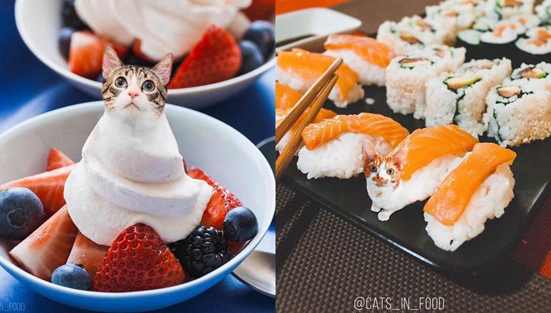 food ทาสแมว สัตว์โลกน่ารัก แมวเหมียว