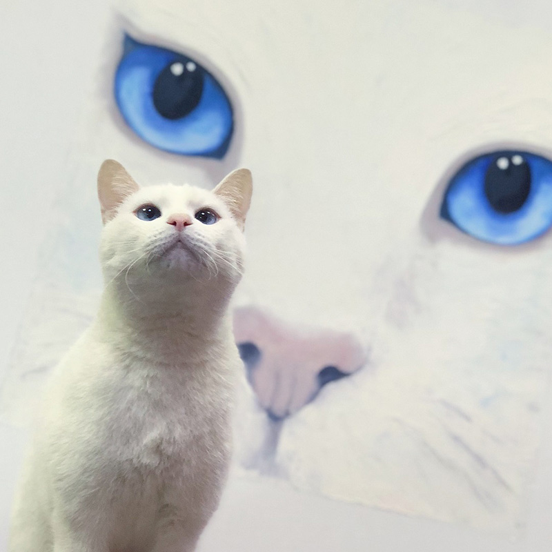 อคิลลิส แมวทำนายผลฟุตบอลโลก 2018