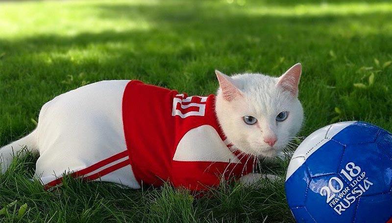 ทำนายผลบอล บอลโลก ฟุตบอลโลก ฟุตบอลโลก 2018 อคิลลิส แมว