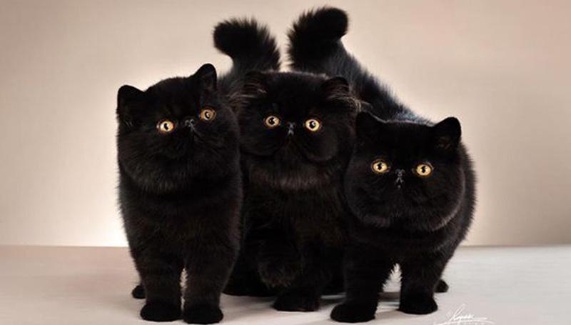 17 สิงหาคม ความเชื่อ ความเชื่อโบราณ วันยกย่องแมวดำ