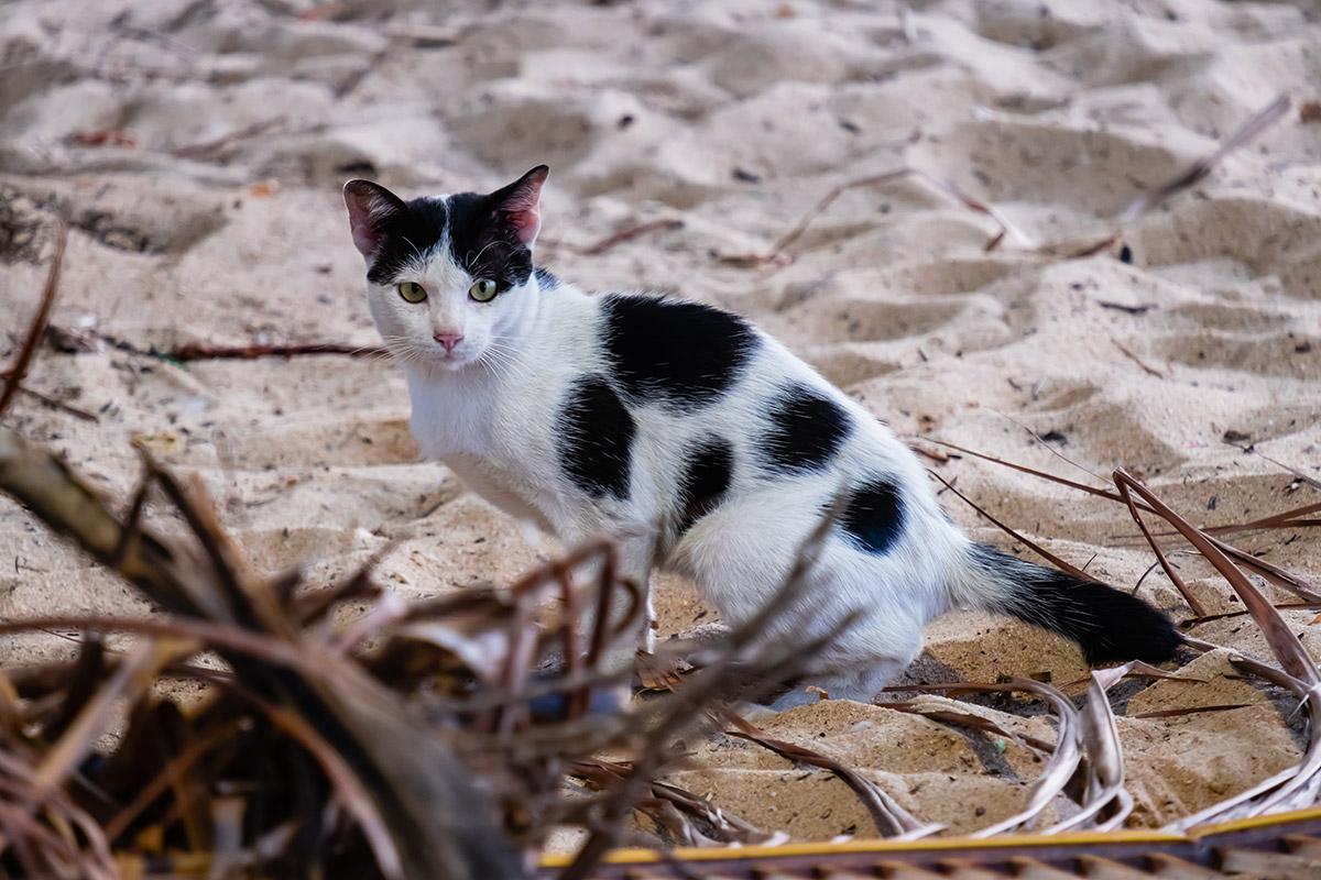 8 สิงหาคม วันแมวโลก (International Cat Day)