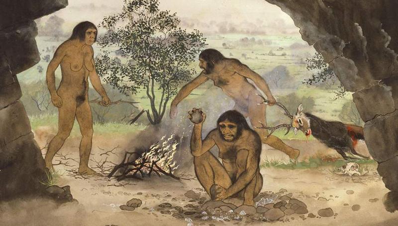 ประวัติศาสตร์ วิวัฒนาการของมนุษย์