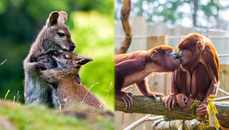 ภาพน่ารัก สัตว์โลกน่ารัก หมีแพนด้า