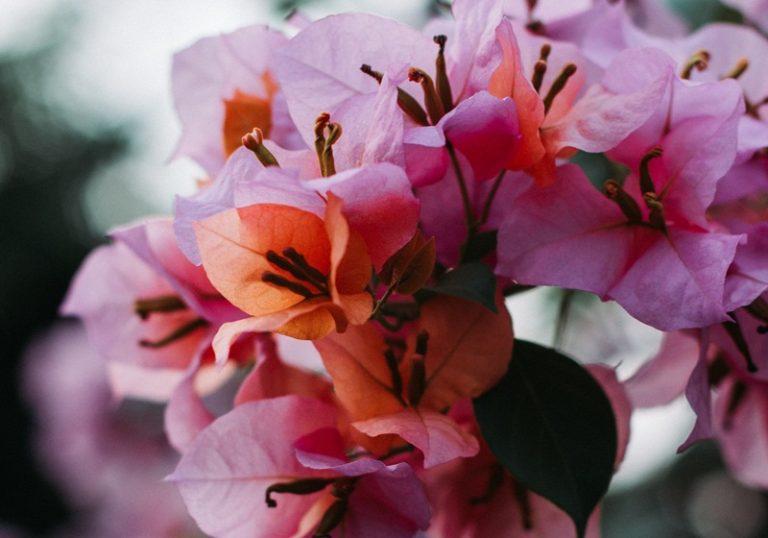 รวมชื่อดอกไม้เพราะๆ ชื่อดอกไม้มงคล เอาไว้ตั้งชื่อคนได้