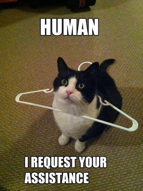 คิดแบบแมว