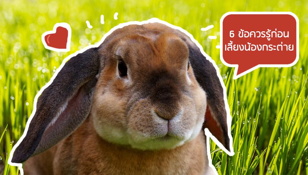 กระต่าย การเลี้ยงกระต่าย วิธีเลี้ยงสัตว์