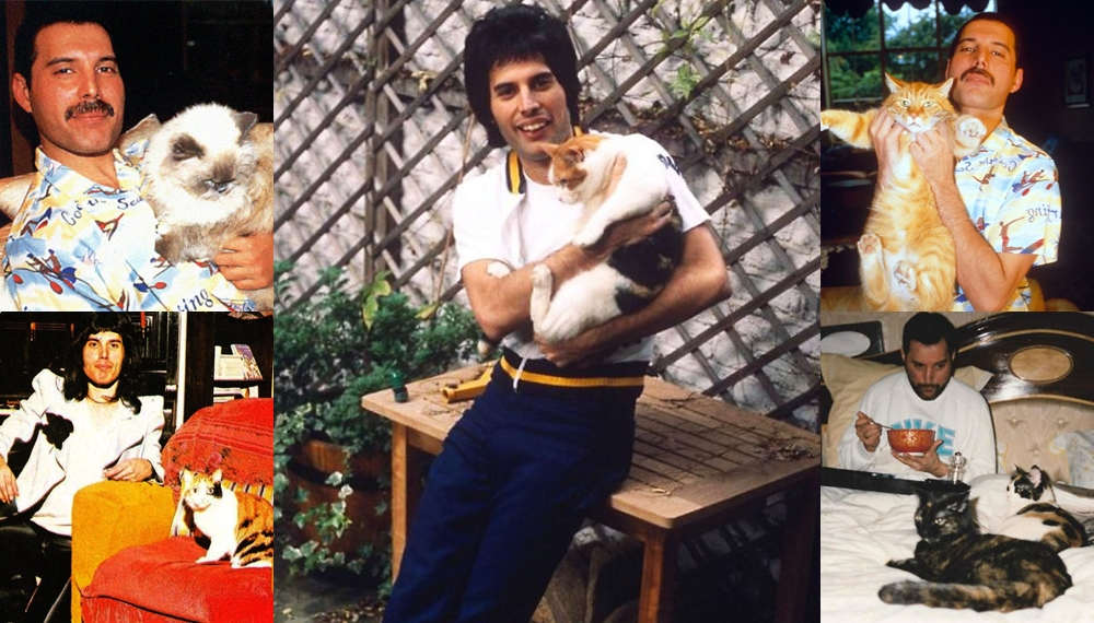 Freddie Mercury ทาสแมว ศิลปินระดับตำนาน เฟรดดี เมอร์คูรี