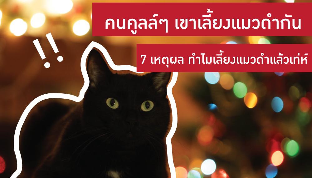 สัตว์เลี้ยง เลี้ยงแมว แมว แมวดำ