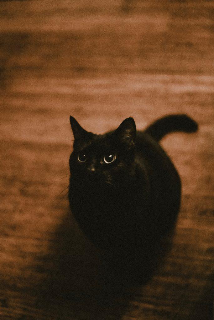 เลี้ยงแมวดำแล้วเท่ห์