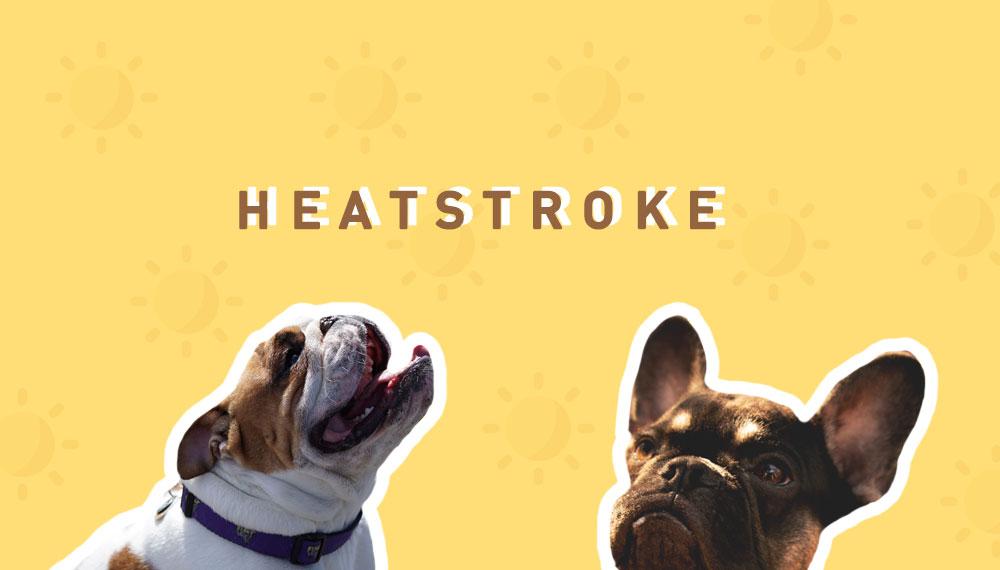 น้องหมา สัตว์เลี้ยง สุนัข หน้าร้อน หมา ฮีทสโตรก แสงแดด