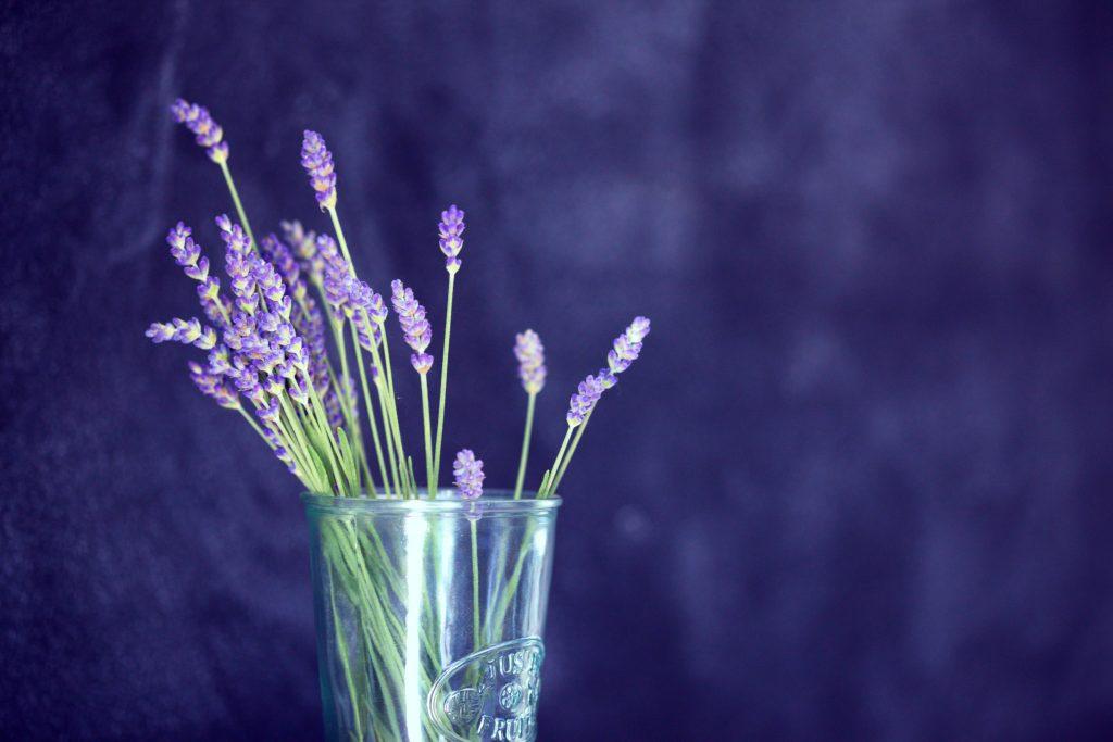 11 พืชกลิ่นหอมไล่ยุง