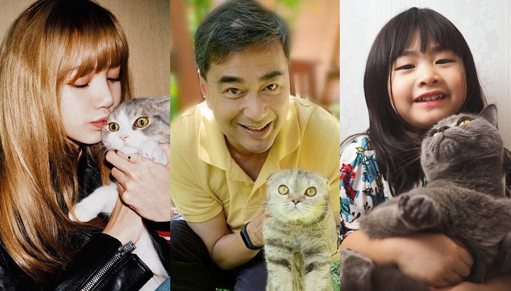 ทาสแมว เซเลป เลี้ยงแมว แมว แมวน่ารัก