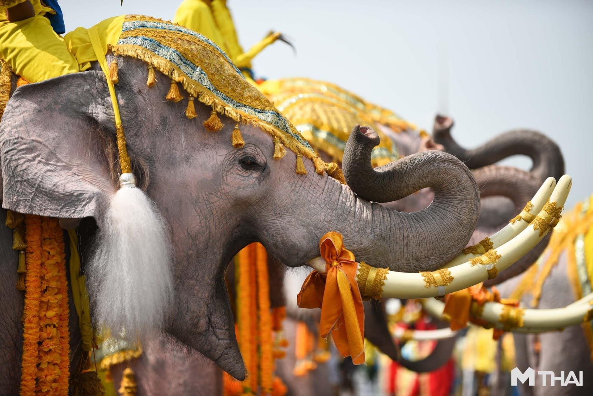 ช้าง พิธีบรมราชาภิเษก เทิดพระเกียรติ ในหลวงรัชกาลที่ 10