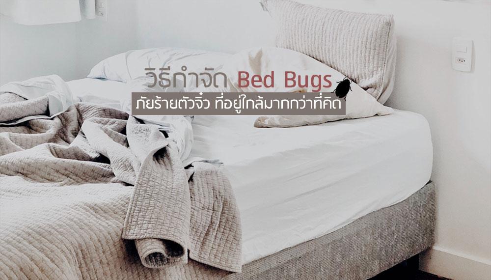 bed bugs ที่นอน วิธีทำความสะอาด