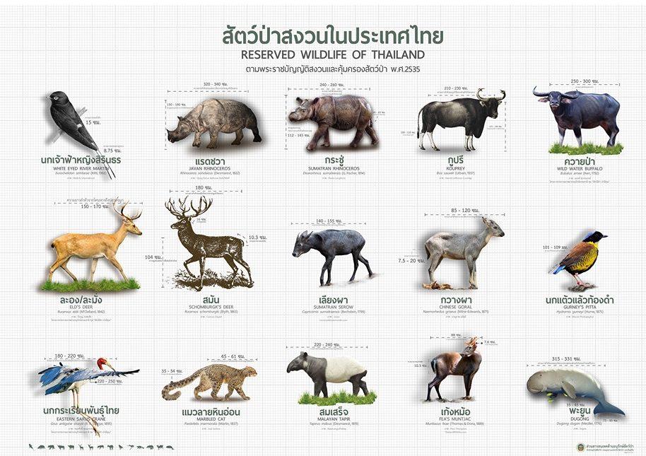 โปสเตอร์สัตว์ป่าสงวนในไทย 15 ชนิด