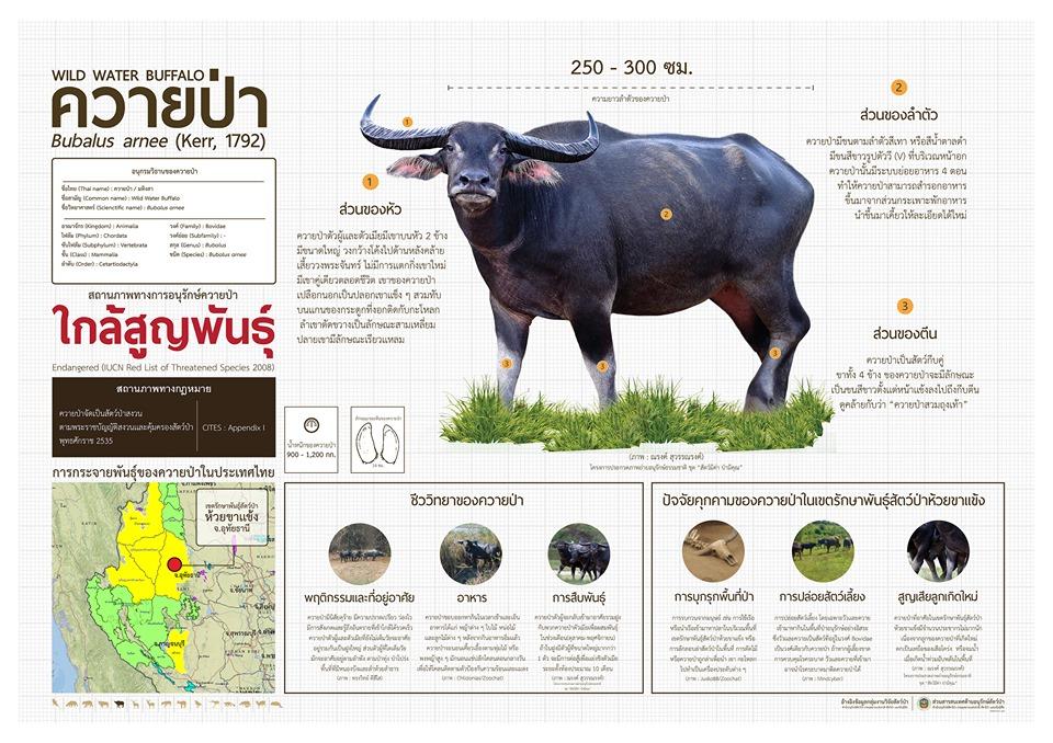 ควายป่า - โปสเตอร์สัตว์ป่าสงวนในไทย