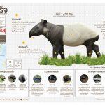 สมเสร็จ โปสเตอร์สัตว์ป่าสงวนในไทย