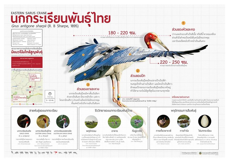 นกกระเรียนพันุธ์ไทย - โปสเตอร์สัตว์ป่าสงวนในไทย