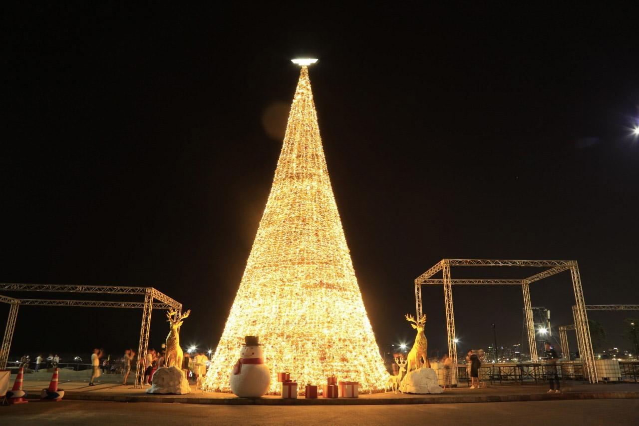 ต้นคริสต์มาส สูง 20 เมตร