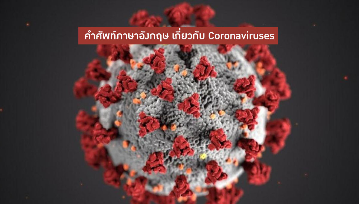 คำศัพท์ภาษาอังกฤษ ไวรัสโควิด-19 ไวรัสโคโรน่า2019